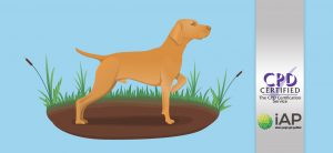 Diploma in Dog Behaviour and Training Level 3