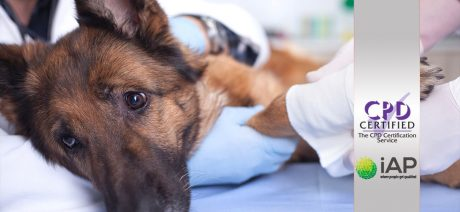 Advanced Certificate in Animal First Aid Level 3