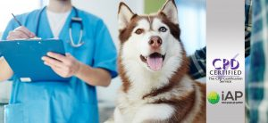 Advanced Certificate in Dog Grooming Level 3