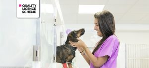 Certificate in Veterinary Nurse Training at QLS Level 3