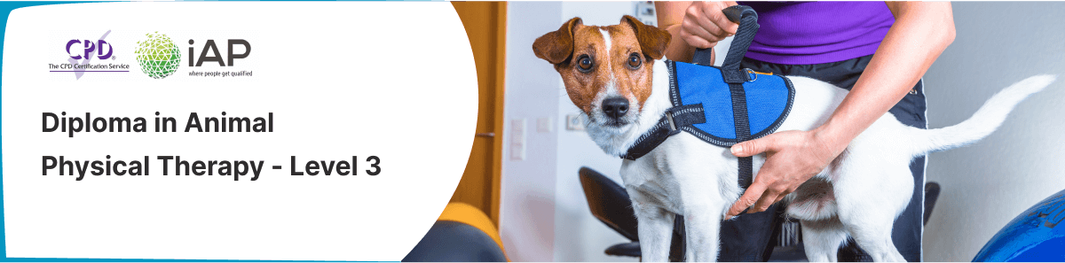 Diploma in Animal Physical Therapy - Level 3
